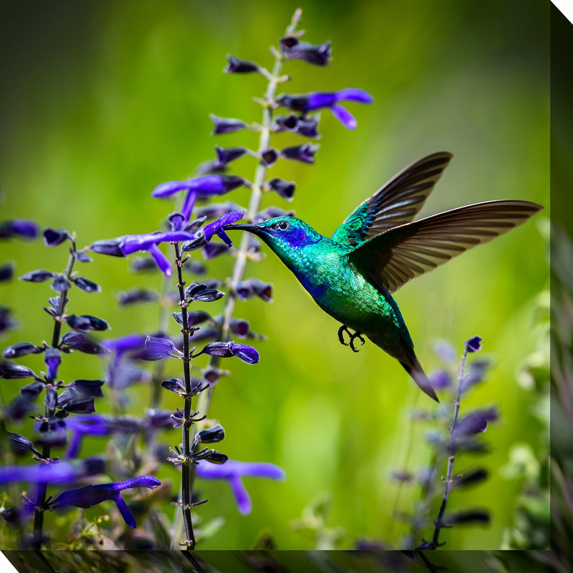 Canvas Wall Art Hummingbird