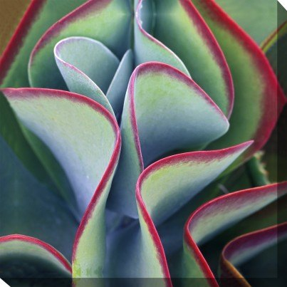 West of the Wind Outdoor Canvas Wall Art - Red Tipped Leaves  by West of the Wind