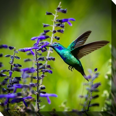 West of the Wind Outdoor Canvas Wall Art - Hummingbird #7  by West of the Wind