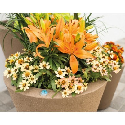 Dot Planter - TruDrop System  by Frontera Furniture Company