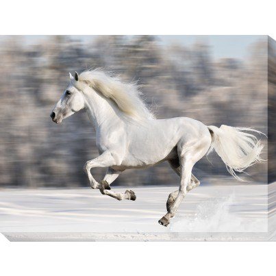 West of the Wind Outdoor Canvas Wall Art - Wild and Free  by West of the Wind