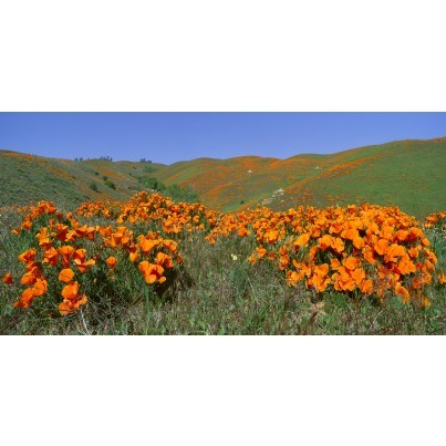 West of the Wind Outdoor Canvas Wall Art - Field of Orange  by West of the Wind