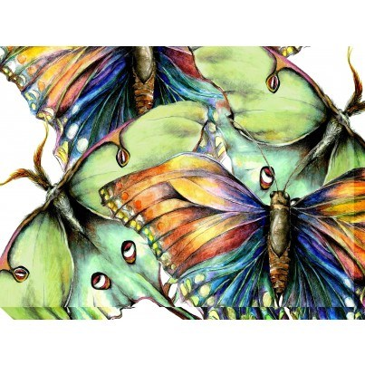 West of the Wind Outdoor Canvas Wall Art - Pastel Butterfly  by West of the Wind