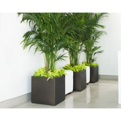 Pandora Planter  by Frontera Furniture Company