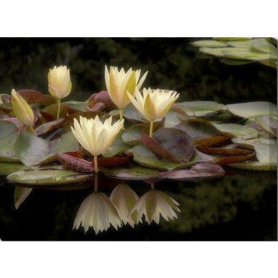 West of the Wind Outdoor Canvas Wall Art - Evening Pond
