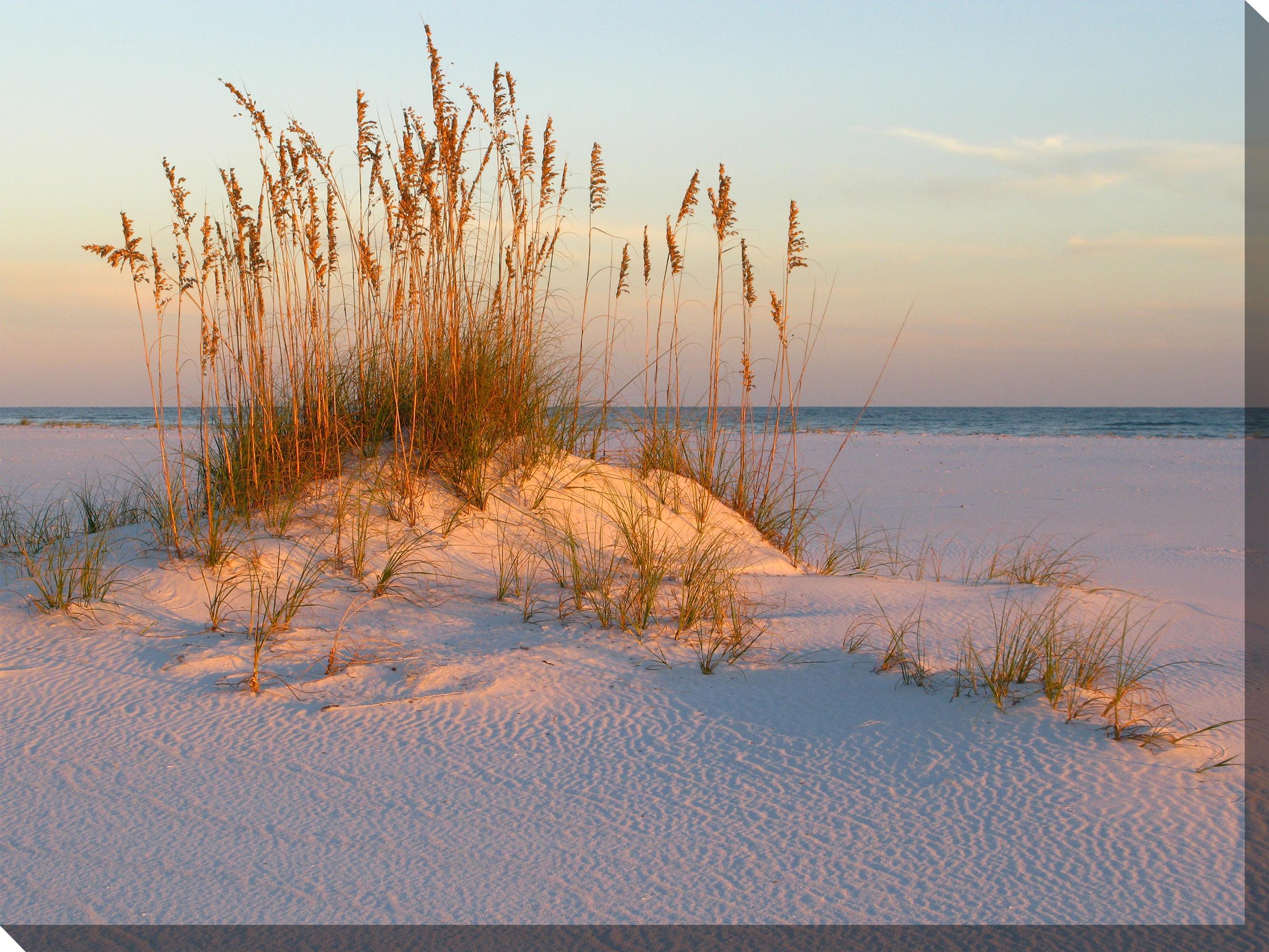 Canvas Wall Art Sea Oats Sand Product Photo