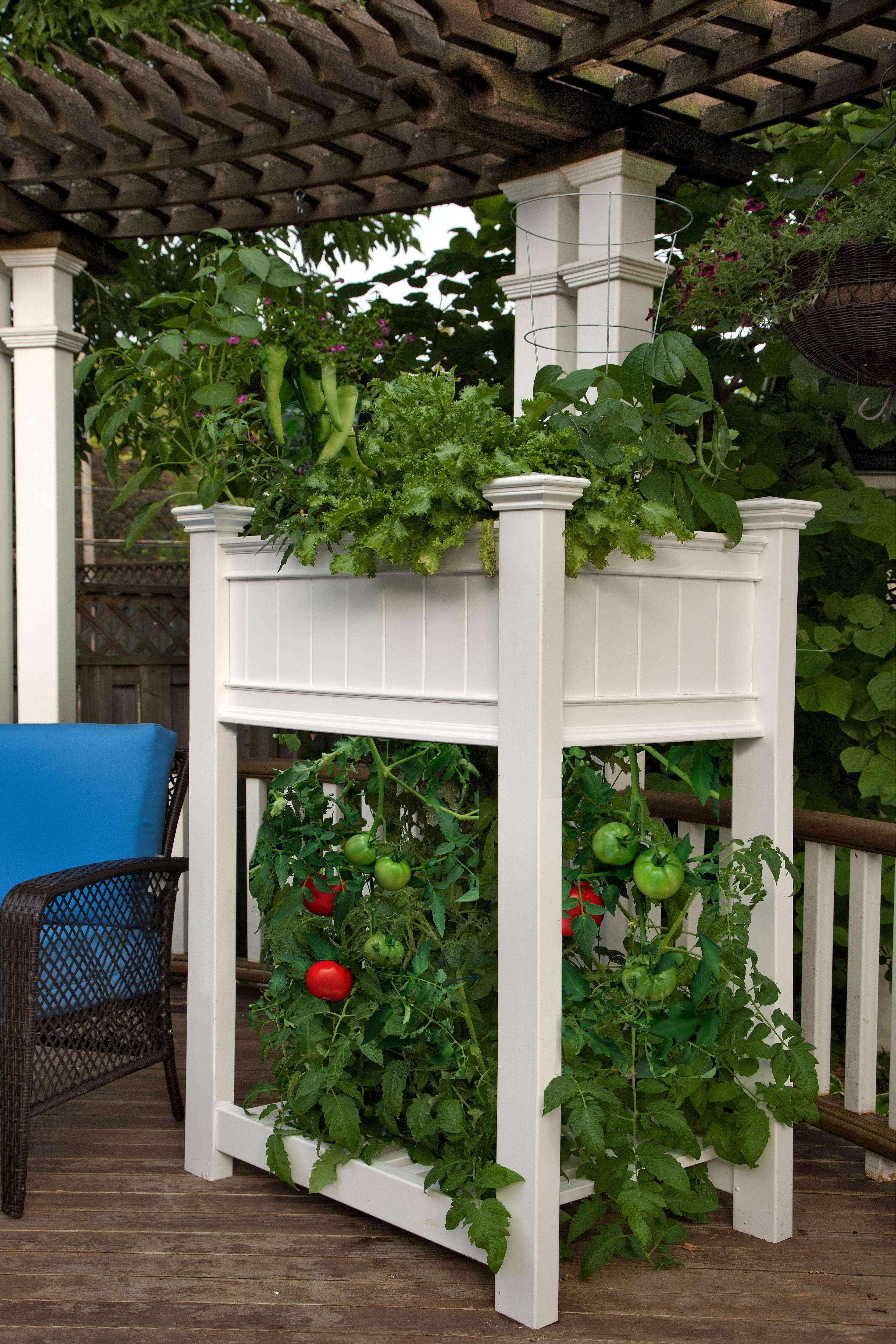 Tomato Planter Product Photo